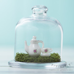 Dollhouse (Ramn Antiolo) Tags: china summer stilllife white hot green english cup nature glass grass vintage ceramic miniature wooden cozy moss picnic bell tea outdoor turquoise lawn lifestyle retro safety nostalgia cover dome jar teapot british shield safe transparent tradition teabreak relaxation teatime afternoontea porcelain herb isolated cloche dollhouse crockery protect fiveoclock instagram