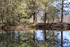 Pond Reflection (wildwoodie56) Tags: park trees ontario reflection london water canon pond 7d springbank