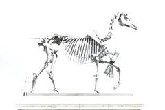 Haacke's Horse 2 SDIM1498 (StefanSzczelkun) Tags: horse skeleton political trafalgarsquare publicart haacke fourthplinth