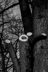 Cut (PabloClavo) Tags: bw tree nature canon cut 70d ef40stm
