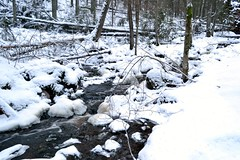 The brook from Kolmoislammit to Pitkjrvi in snowy forest (Espoo, 20120114) (RainoL) Tags: winter snow forest espoo finland geotagged january u brook fin 2012 uusimaa nyland esbo 201201 20120114 geo:lat=6029250500 geo:lon=2454088200 brooksofnuuksio