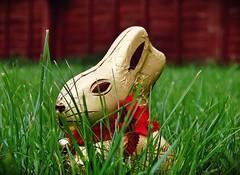 2009-04-12b Easter Bunny ([Ananabanana]) Tags: rabbit bunny grass garden easter nikon chocolate gimp nikkor goodfriday lent lindt eastersunday eastermonday d40 nikonistas nikkor1855mm nikon1855mm nikonista photoscape nikon1855mmkitlens nikkorafsdx1855mm nikonafsdx1855mm
