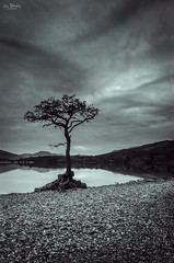 Millarochy Bay (Iain Brooks) Tags: sky white lake storm black tree beach water clouds landscape photography mono bay coast scotland long exposure outdoor scottish iain loch lomond trossachs brooks millarochy