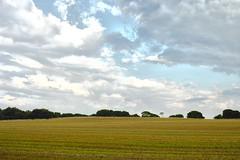 Countryside Fields (jamesromanl17) Tags: field fields countryside cheshire cloud clouds sky skies tree trees foveon sigma x3 merrill