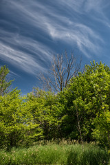 streaming clouds (Mark Heine Photos) Tags: ca trees ontario canada clouds rural farm property laneway crossroad lakehuron lucknow cirrus amberley markheine