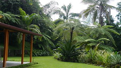 Nuestro jardn por un da (Mayan_princess) Tags: chiapas argovia finca resort caf coffee kaffee paraso paradise vegetacin vegetation verde green ro river spa relajacin relax forest selva orgnico autosostenible