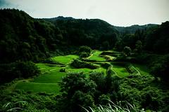 (.) Tags: summer mountain green nature japan