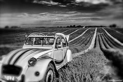 Provence's countryside (Luca-Anconetani) Tags: travel bw france nature monochrome nikon country citroen lavender natura bn campagna fields provence francia paesaggi biancoenero lavanda campi campidilavanda lucaanconetani