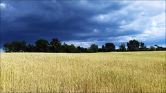 20160701_181805 copy (cora.anne) Tags: landscape clouds field agriculture oats hay