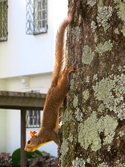 IMG_0806 (shawnzrossi) Tags: graceland memphis tennessee squirrel