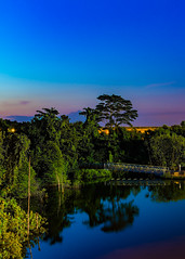 Cropped sunset lol (drumbunkerdragon) Tags: sengkang floating wetlands northeast eastern singapore trees plantation plants green blue sunset twlight skies beautiful wallpaper scenery nature lights reflection silhouette sony rx1r ii sg50