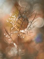 Nigella (Mureau A) Tags: mureau nikon d800 nigella nigelle projection lens dukane 3inch manuel manual prime old vintage bokeh soap bubble diy flower nature garden autumn fall sparkle sparkling pastel