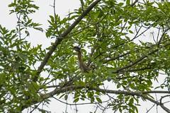 7K8A3878 (rpealit) Tags: scenery wildlife nature east hatchery alumni field hackettstown green heron bird
