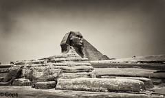 Sphinx (gambat) Tags: egypt egyptianarchitecture eos70d egyptiangods nile architecture ancientarchitecture ancientegypt sphinx monochrome openair giza pyramid gizaplateau cairo