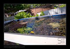 WAIcoral-farm2657 (kactusficus) Tags: aquarium honolulu hawai hawaii waikiki marine fauna reef tropical hawaiian hawaien corals coraux surface growth growing farm farming ferme propagation