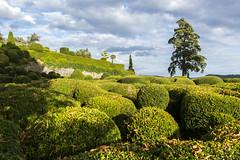_DSC7550 (Robby68) Tags: vert marqueyssac jardin dordogne nature france soir suspendu