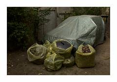 Fin de partie (hlne chantemerle) Tags: bche voiturebche sacspoubelle feuillesmortes jaune bleu yellow blue carcovered trashbags deadleaves