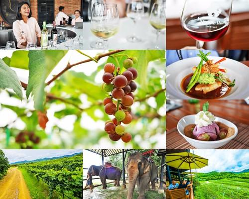 華欣 葡萄酒莊園 Hua Hin Hills Vineyard 華欣旅遊景點推薦