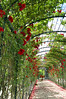 Tunnel of Love (Paulina_77) Tags: schönbrunn vienna wien park flowers light shadow red roses wild sky plants plant flower green nature rose gardens fence garden botanical austria vanishingpoint petals bush alley flora nikon scenery mood boulevard moody bright outdoor pov path vibrant perspective dream vivid tunnel scene pointofview climbing arbor greenery botanic colored wilderness climber shrub nikkor residence creeper schloss footpath bushes schlosspark hdr pathway arcadia flourish blooming 18105 arbour habsburg d90 18105mm nikond90 schonbrunner atmnosphere nikkor18105mm 18105mmf3556 pola77