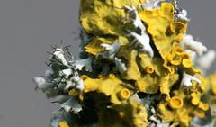 Mikrokosmos (albertuszerk) Tags: erwachen fruehling augenblick kreativ wahrnehmung motiv mikrokosmos entdecken bildergalerie faszinierend inspirierend fotoschmiede