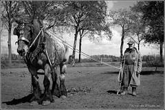 DSC_1420 5-2 (Ton van der Weerden) Tags: horses horse dutch de cheval belgium jan belgian nederlands belges draft chevaux someren belgisch trait trekpaard swinkels trekpaarden