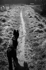 Walkies (ThrottleUK) Tags: dog field puppy walking pepper shepherd german pup pathway walkies gsd