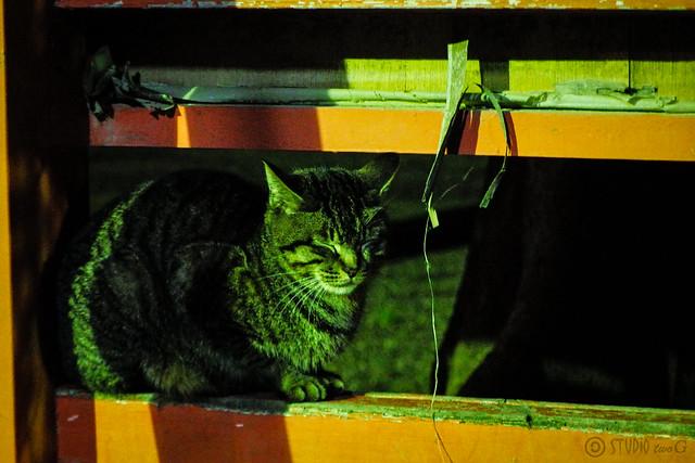 Today's Cat@2015-04-11