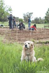 Hortus in Fabula_Unical (Aldo Tomaino_01) Tags: verde semi giallo terra ortobotanico orto unical hortusinfabula croceviacalabria ortobotanicounical