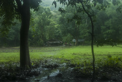 Trail Walk through Nagla block, Sanjay Gandhi National Park, Mumbai, India (E R) Tags: rain biosphere monsoon mumbai sanjaygandhinationalpark mumbaimonsoon sahyadrihills vasaicreek indianmonsoon forestecosystem mumbainationalpark westernghatbiosphere