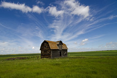 Sweet summer day (brakes4bunnies) Tags: summer abandoned grass barn alberta decaying feild
