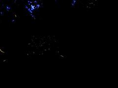 Luciernagas (G-sus-itto) Tags: luciernagas tlaxcala mexico