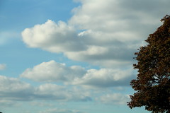 Drop Shot (Mk) Tags: travels wander daytrip clouds mommashouse mothers test tree sky portorchard washington downtown