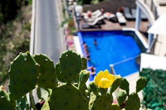 Sicily (D.Rizza) Tags: sicily taormina wonder summer beauty swimming swim pool relax flower fico dindia plant water street hotel colours blue yellow green white sun hot holiday