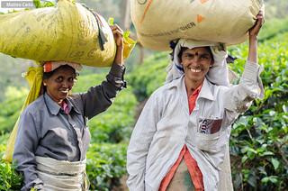 Tea Pickers Woman
