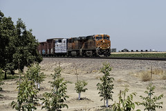 Crawling by the Orchard (lennycarl08) Tags: california railroad train trains centralvalley burlingtonnorthernsantafe burlingtonnorthernsantaferailroad