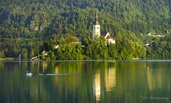 DSC9275 (Elvir72) Tags: bled lake reflection slovenia europe kranj swan nature