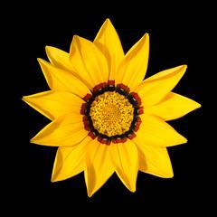 'Gazania' (Jonathan Casey) Tags: flower macro zeiss nikon gazania f2 135mm d810