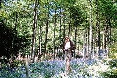 PICT0619 (Tilley441) Tags: 35mm filmsnotdead filmphotography shootfilm analoguefeatures filmisnotdead film streetphotography filmcamera analog kodak architecture filmphotographic 35mmfilmphotography 35mmkodachrome kodachrome 35mmslides 35mmtransparencies transparencies oldphotos daysgoneby tilley441 box 282 leith hill june 1971