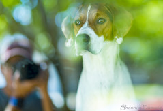 Cooper (Dizmang Photography) Tags: dogphotography petphotography coloradopetphotography denverdogphotography denver colorado reflection selfie mutt rescue dogs pets nikon85mmf14g nikon nikon85mmf14 85mm