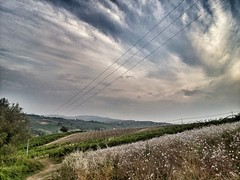 Walking on a Summer evening (Eilis88) Tags: landscape vineyards oltrepo lombardy italy hills evening summer nature green sky