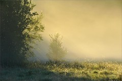 morning glow (me*voil) Tags: landscape tree meadow sunrays fog altebult hannover