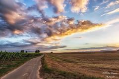 Sptsommer (Peter Daum 69) Tags: sunset licht light sommer sptsommer canon eos 6d color farbe wolken clouds feld landscape scenery landschaft natur nature