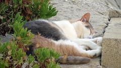 Pauline_7775 (Wayloncash) Tags: tiere katzen cats spanien andalusien
