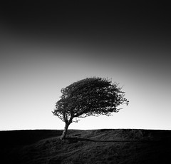 One Tree (vulture labs) Tags: zeiss minimal minimalist photography nikon d800e vulture labs fine art silhouette bw