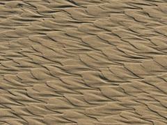 sand patterns (caboose_rodeo) Tags: 9154 sand silica patterns stoneharbornj herringbone favorite notadune notalandscapealthoughpartofone jerseyshore explore