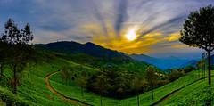 Sunrise In The Blue Mountains (Coonoor) (rajeevchopra.india) Tags: sunrise nilgiri mountains teaestate india coonoor clouds