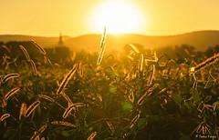 Olyan vilg.. (tferi666) Tags: sunset sun night ngc beautyful nice best travel silence hungary magyarorszg zempln srospatak sony ilce next a6300 discovery world nature sonyflickraward sonyflickrawardgold epz18105mmf4goss 18105mm