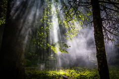 Sun flares in the forest (Thomas Alexander Nagy) Tags: branch branches creepy dusk enjoyment enlightened enlightenment evening field flare fog forest freedom fresh grass haze hidden illuminated leafs leaves light lonely meadow mist mysterious mystic nature outdoors penetrate rays secret shine smoke spring summer summertime sun sunbeams sunlight sunset sunshine tree wallpaper woods