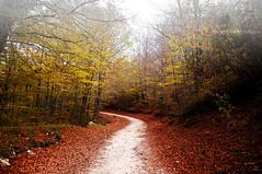 Opi (Mary-Eloise) Tags: montagna bosco landscape nikon d90 nebbia autumn fall warm love lovely wald wow marialuisadicostanzophotography