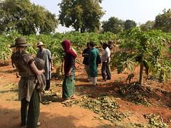Convential farm going organic